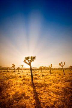 Joshua Tree National Park Sonnenuntergang von Melanie Viola