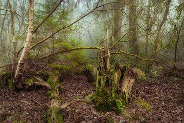 Forêt d'automne brumeuse et atmosphérique sur Peter Bolman
