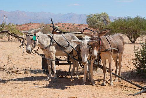 Ezel vervoer