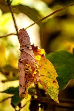 The leaf van