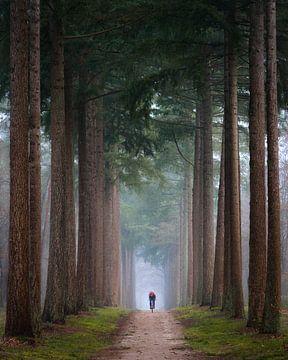 De eenzame fietser   Bomenlaan op een mistige ochtend   Natuurfotografie op de Veluwe van Marijn Alons