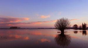 Ondergelopen polderland in de Biesbosch van Jacques van der Neut