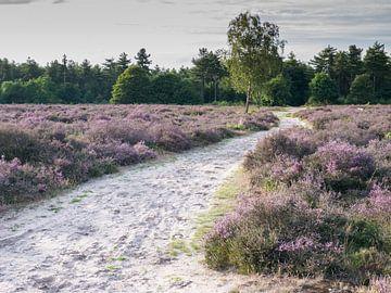 Buntes Maashorst-Heidekraut von Moniek van Rijbroek