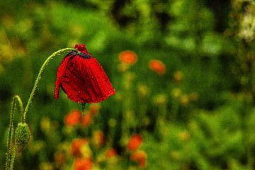 Mit Analogen Objektiv Wald Blume Wiese Feld Nebel von Johnny Flash
