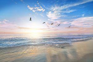 Strand en meeuwen