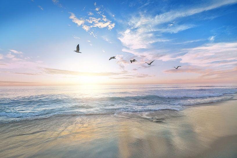 Strand en meeuwen van Fela de Wit