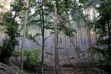 Verlassener Wald von Marielle van Dijk