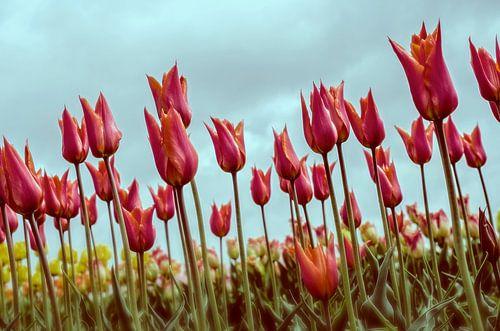 Tulpen  van VanEis Fotografie