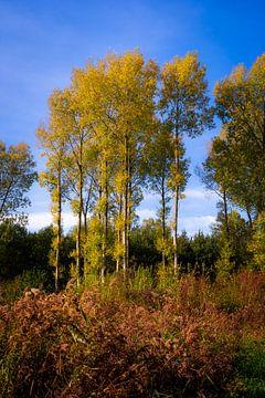 Goldener Wald im Herbst von Urban Photo Lab