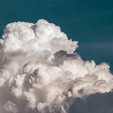 Vogelschwarm in einer dichten Wolkendecke am Himmel von Roger VDB