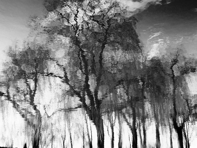 Tree Magic 78 van MoArt (Maurice Heuts)