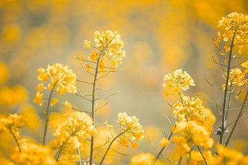 geel bloemenveld van Elke De Proost