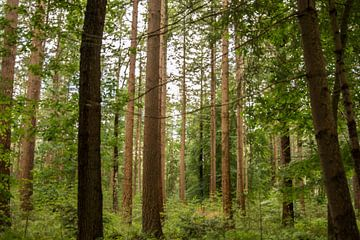 Wald von Carla Eekels