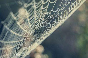 Herbst-Web von Hans Lunenburg
