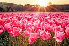 Alle bloemen & planten collectie voorbeeld