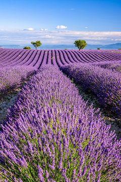 Zomer in de Provence van Achim Thomae