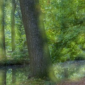 Bos van Hennie Zeij