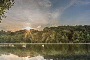 Schwäne bei Sonnenaufgang im Cranenweyer