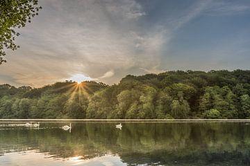 Zwanen tijdens de zonsopkomst in de Cranenweyer van John van de Gazelle