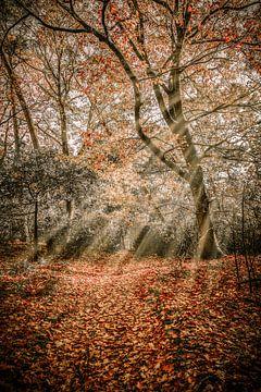 Herbstsaison von Alvin Aarnoutse
