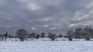 a winter landscape van Koen Ceusters