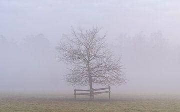 Boom in de mist van Margreet Riedstra