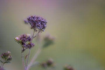 Blume Teil 24 von Tania Perneel
