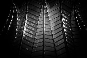 Lijnen in zwart-wit van