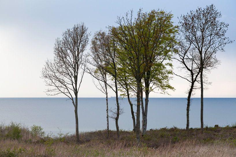Bomen voor de kust van Denemarken van Tot Kijk Fotografie: natuur aan de muur