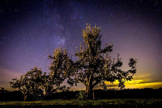 Perenbomen onder de sterren