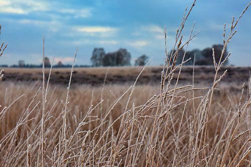 Heide veluwe Nederland