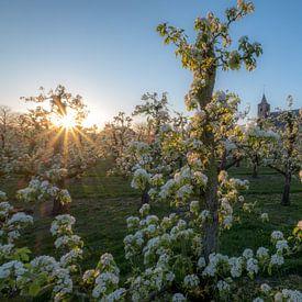 Kerk tussen fruitboomgaard van Moetwil en van Dijk - Fotografie