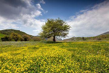 Boom in bloemenweide van Antwan Janssen