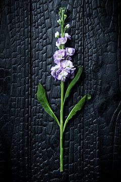 Blume 002 von Mo Barends