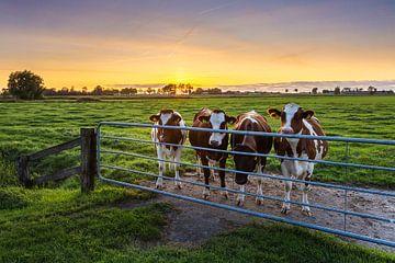 Neugierige Kühe, Marsum (Gr.) von Ton Drijfhamer