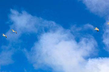 vogels in de blauwe lucht van Silke bakker