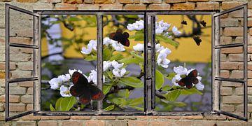 Fensterblick - Schmetterlinge von Christine Nöhmeier