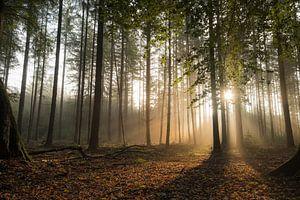 Mystiek bos met zonneharpen van Moetwil en van Dijk - Fotografie