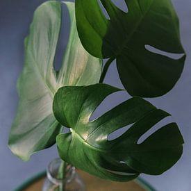 Plante botanique sur Wendy Bos