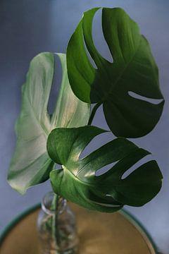 Botanische Pflanze