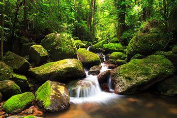 Masoala regenwoud beekje von Dennis van de Water