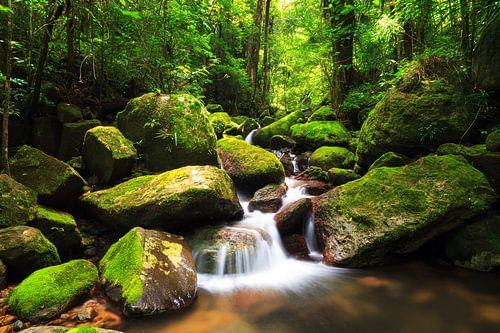 Masoala regenwoud beekje van Dennis van de Water