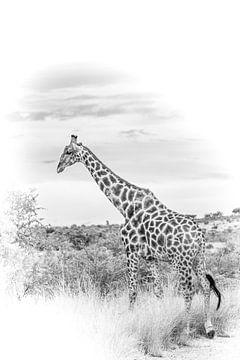 Giraffe in schwarz-weiß. von Gunter Nuyts
