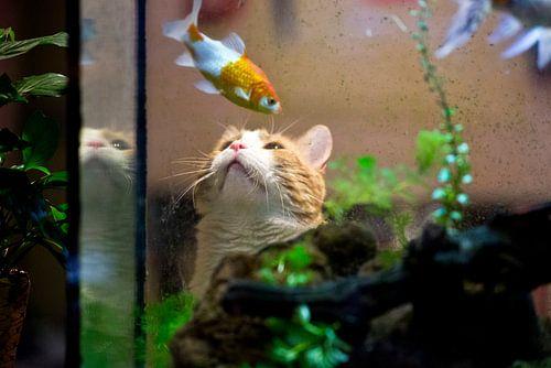 Poes bekijkt aquarium van