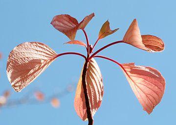 Herfst 2 von Jonathan Kremer