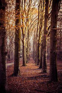 Pad omgeven door bomen