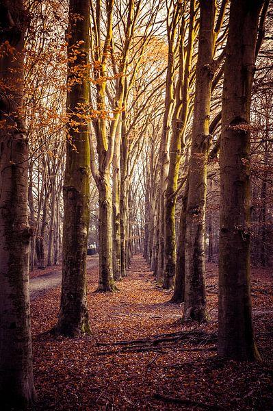 Pad omgeven door bomen van Jan Diepeveen