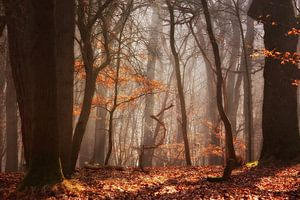 Diep in het bos...