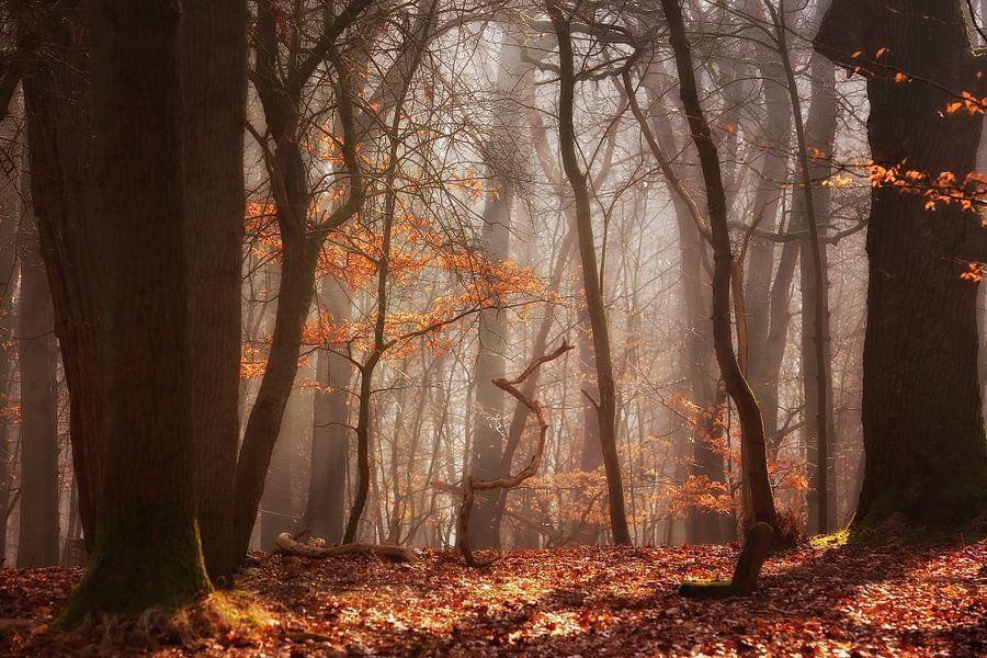 Diep in het bos... van LHJB Photography