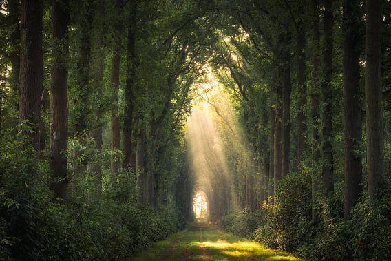 Magie in het bos van Edwin Mooijaart